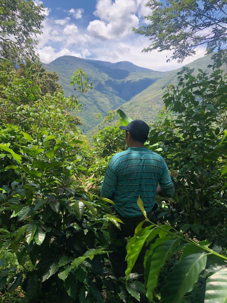 Sur les plantations de café à 1'700 mètres